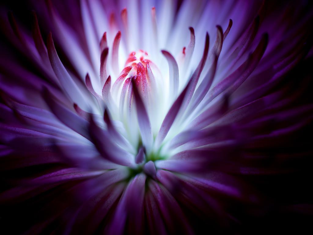 fully blossomed self